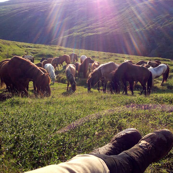 在马背上领略冰岛东部的自然胜景