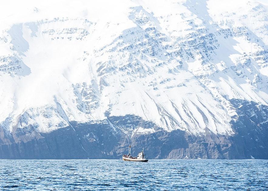 Whale-Watching-Boot in der Skjálfandi-Bucht bei der Stadt Húsavík