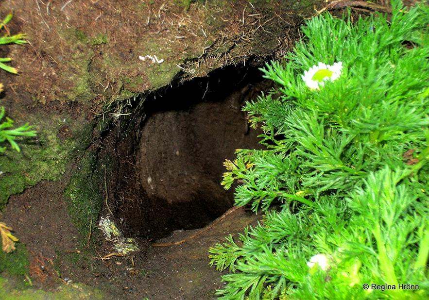 Puffin hole on Drangey island