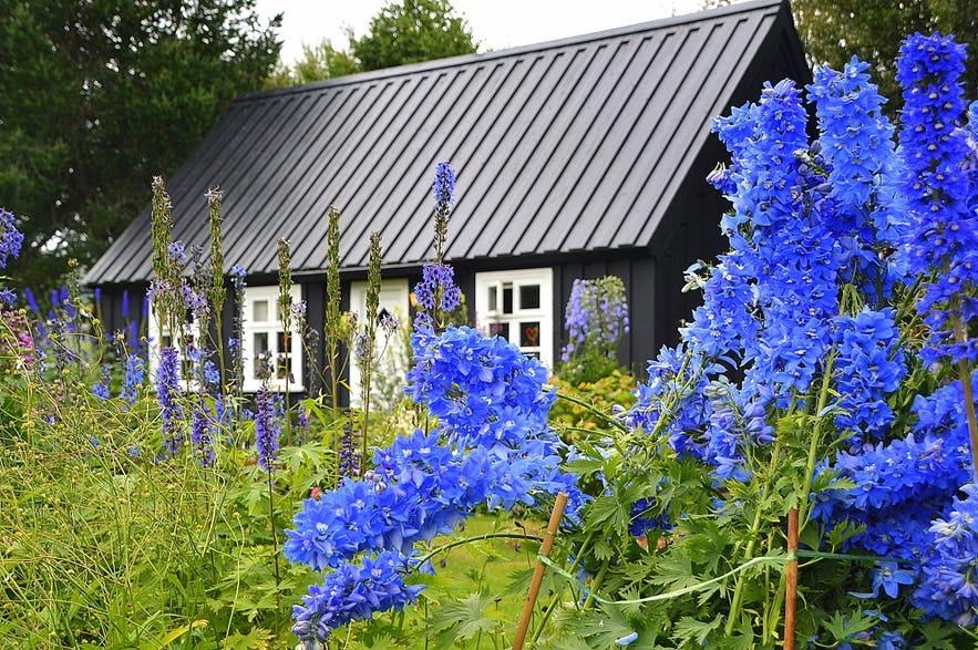 冰島極低植物園
