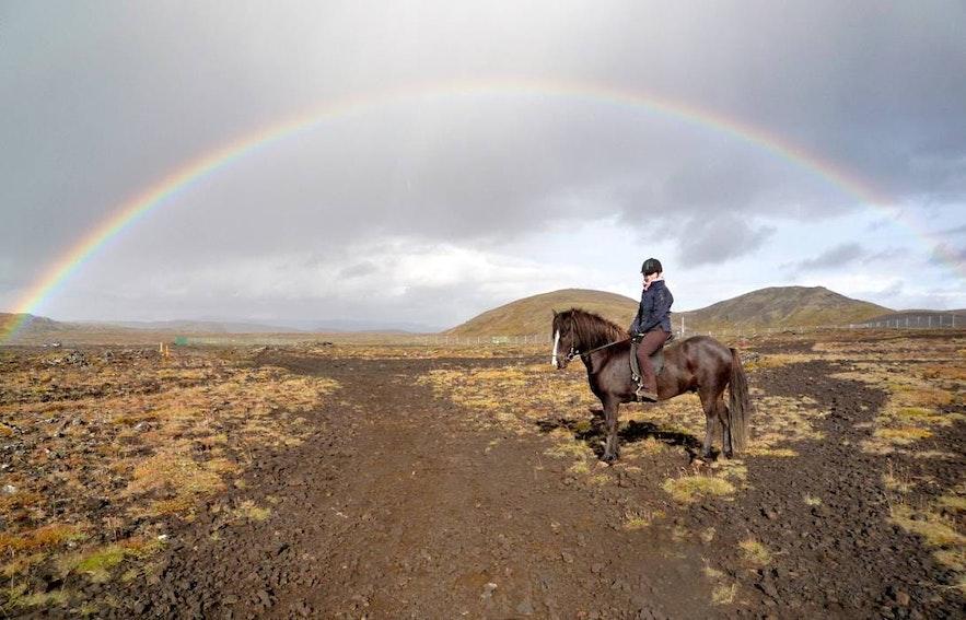 Icelandic horse under a rainbow