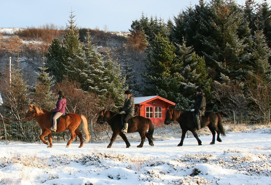 Riding in the snow on an Icelandic horse