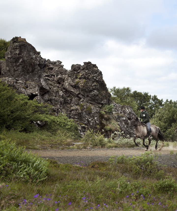 The Icelandic horse has two unique gaits; tölt and skeið or 'flying pace'