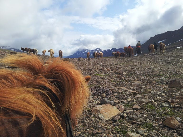 Riding a horse through desolate mountain roads is the most essential and original Icelandic experience.