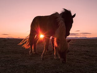 8-Day Horse Riding Adventure   East Fjords of Iceland