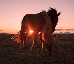 8-Day Horse Riding Adventure | East Fjords of Iceland