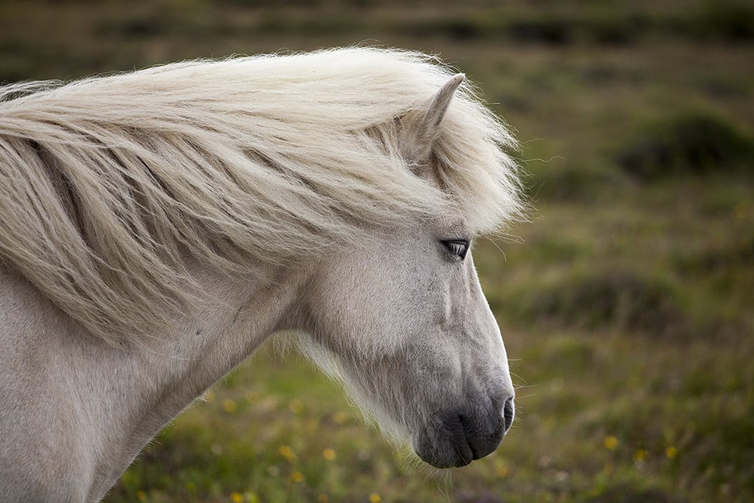 The Deserted Fjords of East Iceland | Horse Riding Adventure
