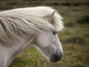 The Deserted Fjords of East Iceland   5-Day Horse Riding Adventure