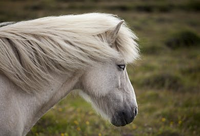 The Deserted Fjords of East Iceland | 5-Day Horse Riding Adventure