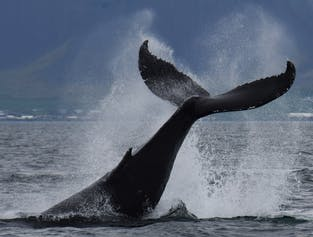 Reykjavik Combination Tour | Buggy Ride & Whale Watching