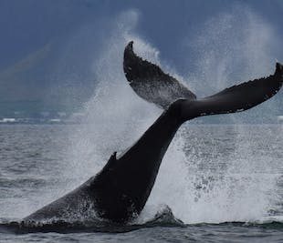 Reykjavik Combination Tour   Buggy Ride & Whale Watching
