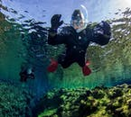 You will equipped with all necessary kit for snorkelling in Silfra, including a dry suit and neoprene hoods and gloves.
