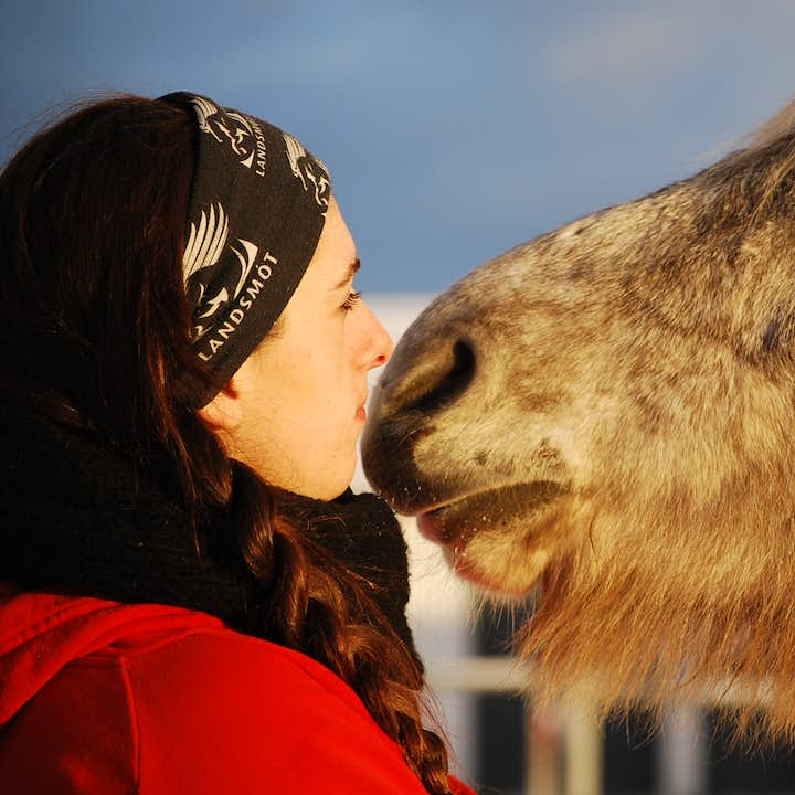 The Icelandic horse is known for being one of the friendliest horse breeds in the world.