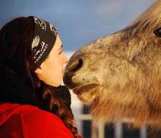 Meet the Icelandic Horse | Hafnarfjordur Horse Farm Visit