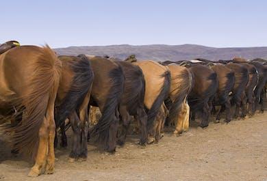 Golden Circle & Horse Riding Day Tour   Classic Icelandic Experiences
