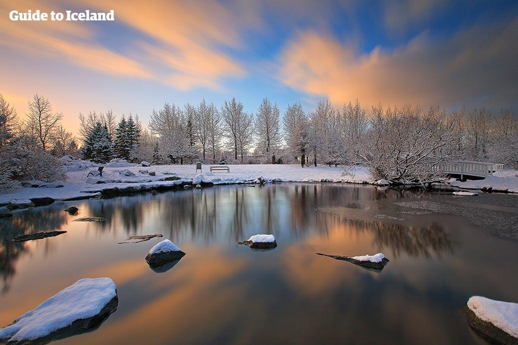 Pokryte śniegiem drzewa otaczają spokojne jezioro w Reykjaviku.