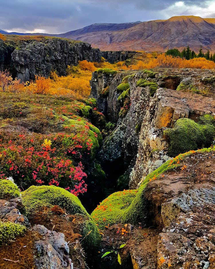 Þingvellir National Park in autumn colours is one of the most beautiful sights in Iceland