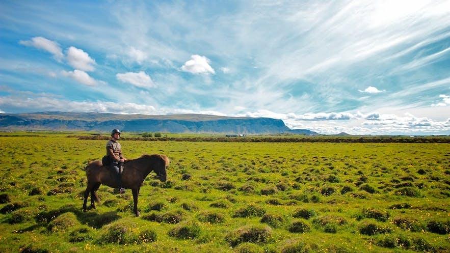冰島夏季騎馬