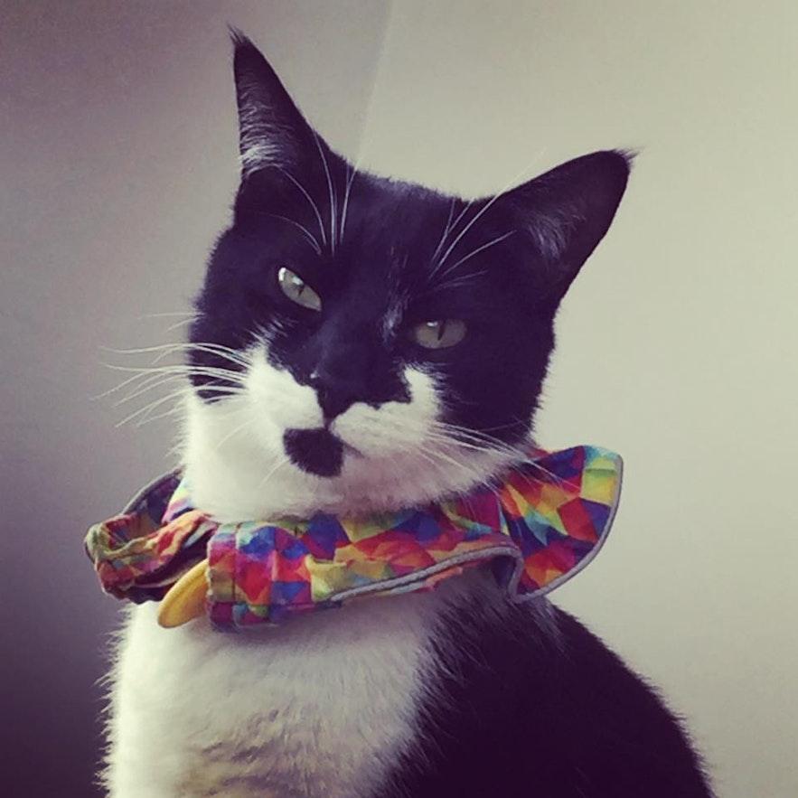Sigfús Máni, Icelandic cat ready to party.