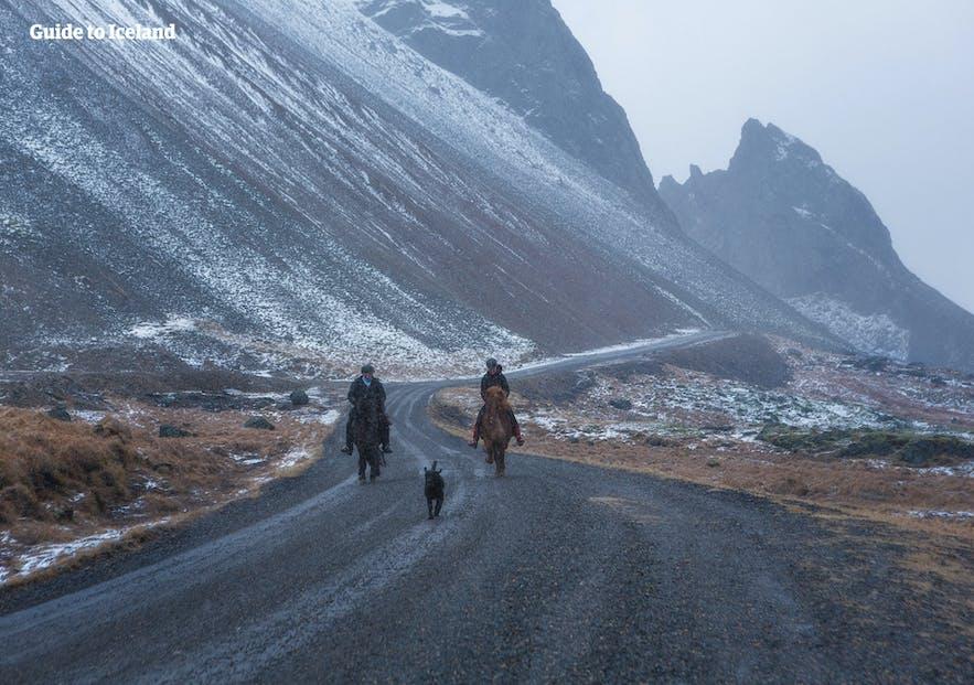 骑冰岛马的体验