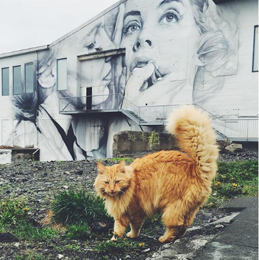 Icelandic cat strolling past Reykjavík's famous street art