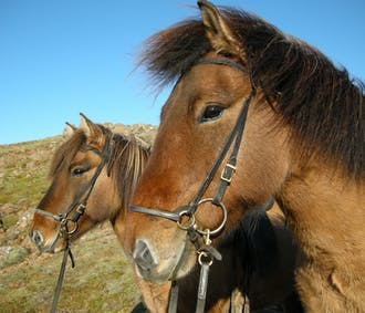 Red Lava Horse Riding & Whale Watching Tour