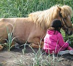 Young kids like the friendly and easygoing Icelandic horses.