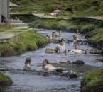 冷たい川の水と交わる高温の温泉が、レイキャダールル渓谷の秘湯を作り出している