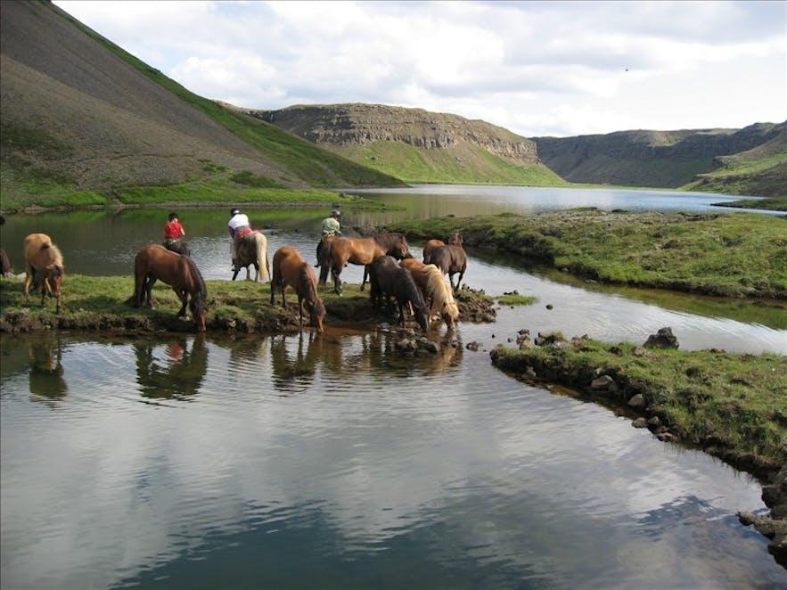 アイスランド北部のダイナミックな自然を楽しむ乗馬体験