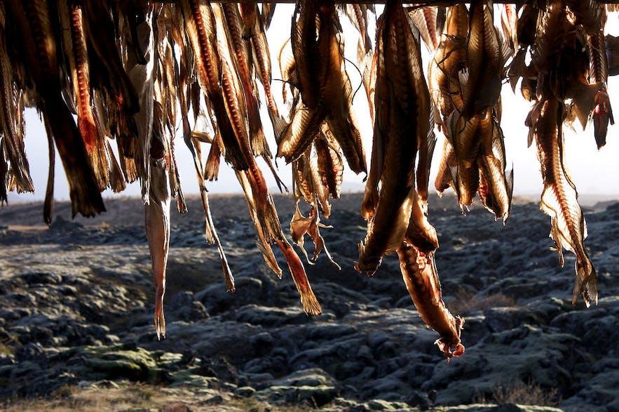 正在风干的冰岛鱼干