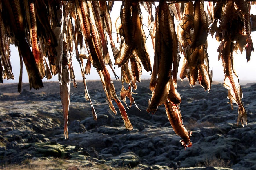 Salted cod hung to dry
