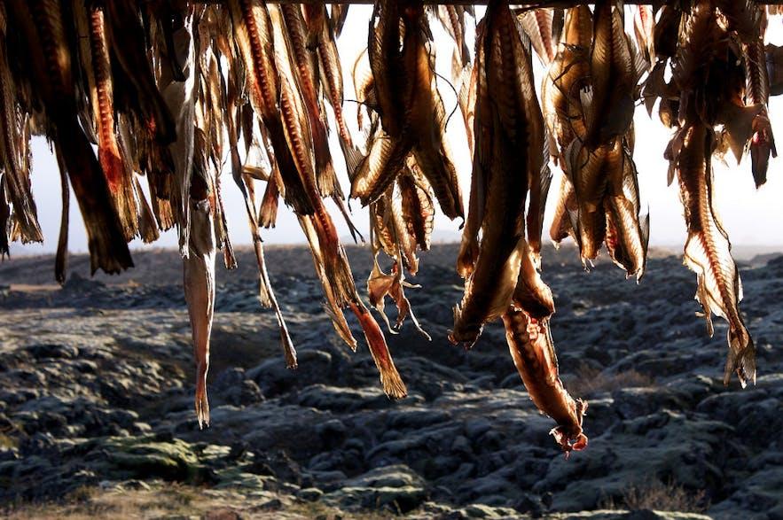 Gesalzener Kabeljau, zum Trocknen aufgehängt