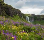 Seljalandsfoss waterfall, as seen from beside the entrance to Gljúfrabúi waterfall.