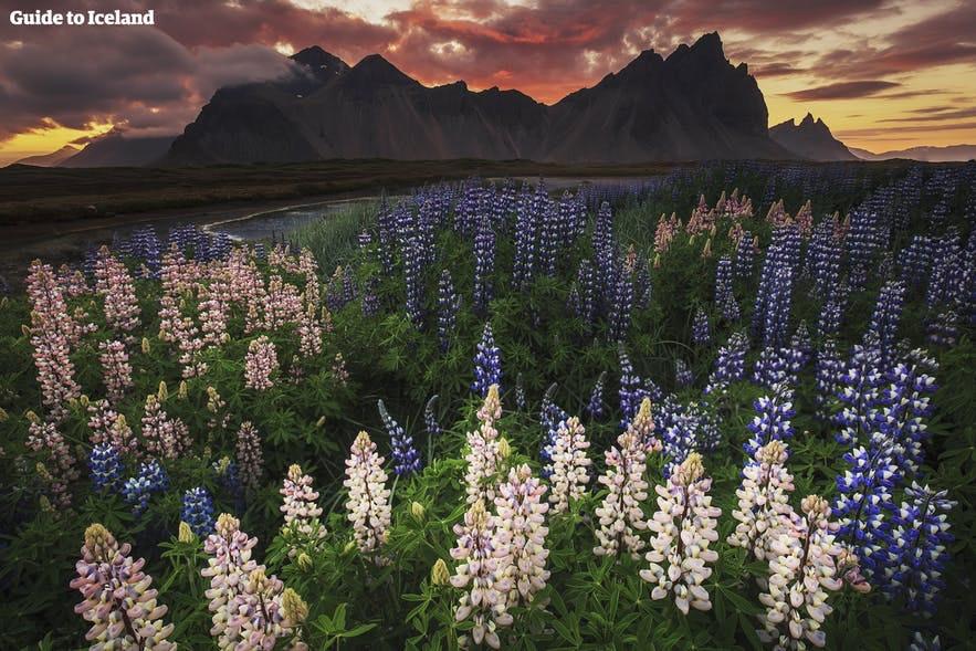 冰島夏季12點