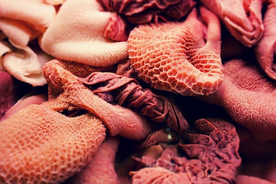 아이슬란드 생선 위장 음식