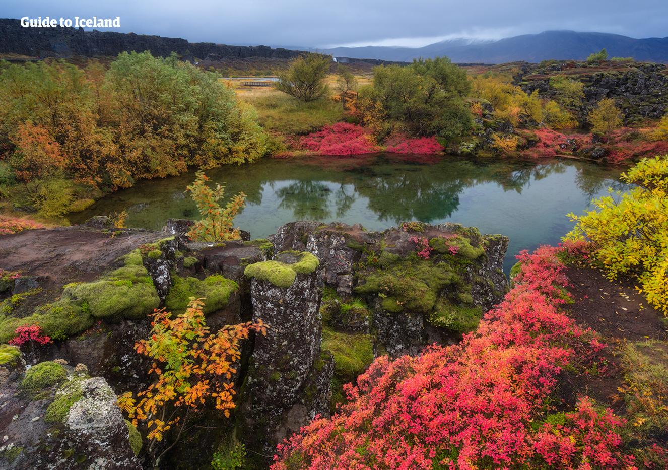 อุทยานแห่งชาติธิงเวลลีร์บนวงกลมทองคำปกคลุมด้วยสีแดง เหลือง และเขียวสวยงาม