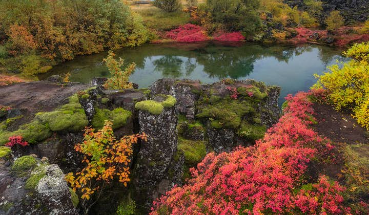 The Golden Circle's Þingvellir National Parked cloaked in beautiful red, yellow and green colours