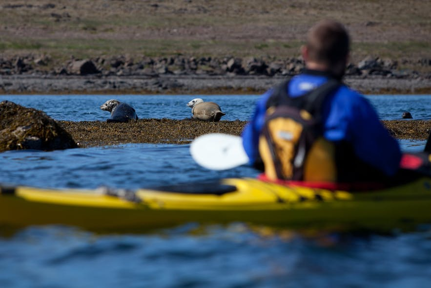 Canoeing and kayaking allow you to get closer to Iceland's wildlife than otherwise possible.