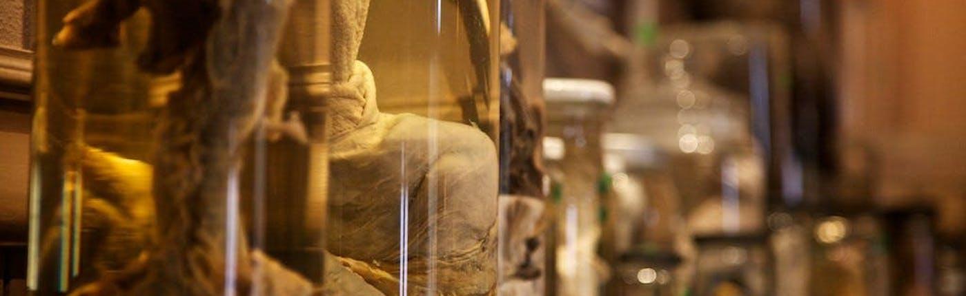 레이캬비크 박물관에 있는 성기