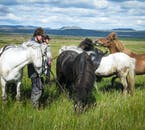 Make sure you give your horse a break while on a riding tour in Iceland!
