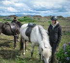 Contrast in colours of both horses and landscape in Iceland.