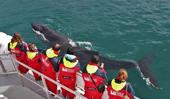 阿克雷里观鲸团