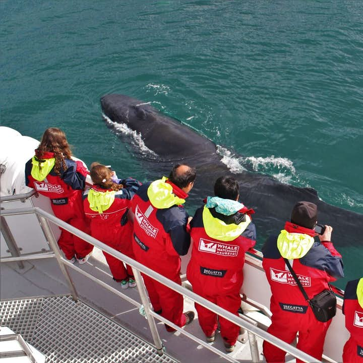 Knölvalar i Eyjafjord | Valskådning från Akureyri