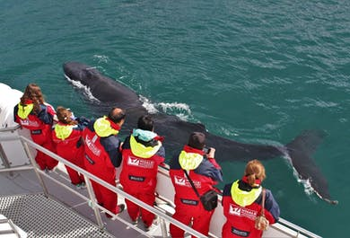 Rejs oglądania wielorybów | Wycieczka z Akureyri