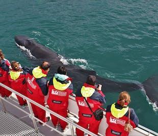 Горбатые киты в Эйяфьорде   Китовое сафари из Акюрейри