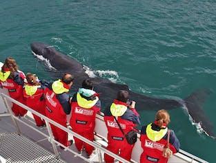В рамках этой экскурсии по  наблюдению за китами вам дадут теплые комбинезоны.