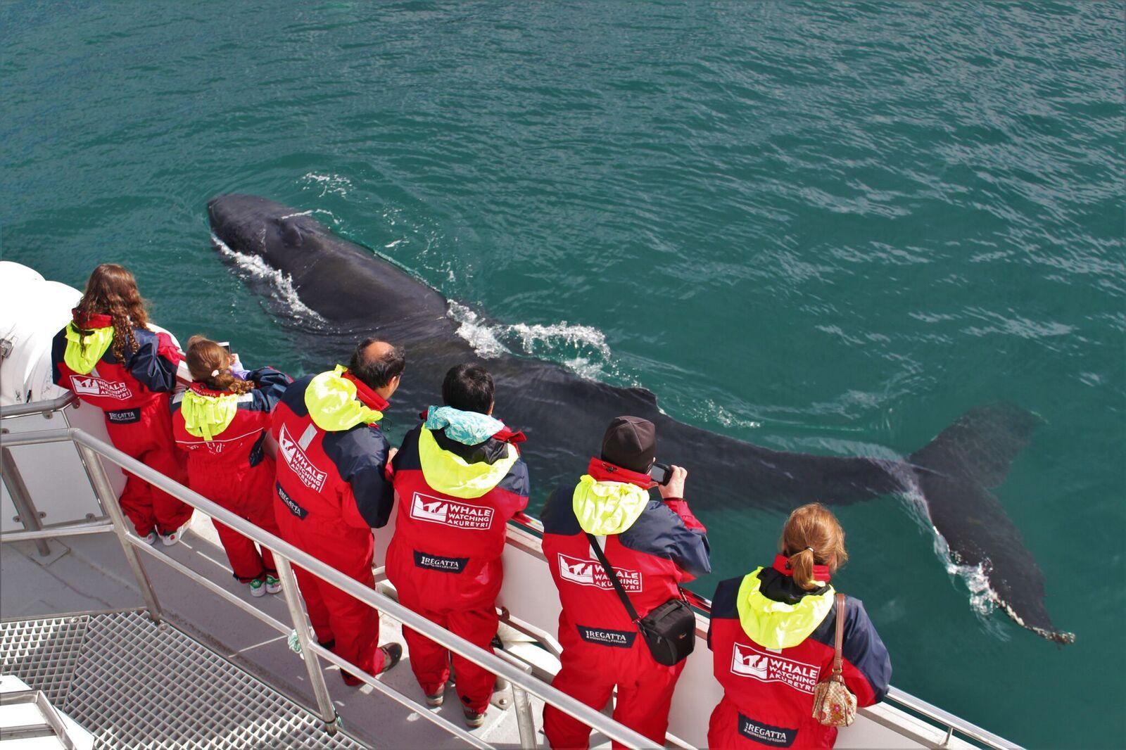Varme kjeledresser tilbys på denne hvalsafarituren fra Akureyri.