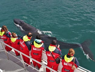 Warm overalls are provided on this Whale Watching tour from Akureyri.