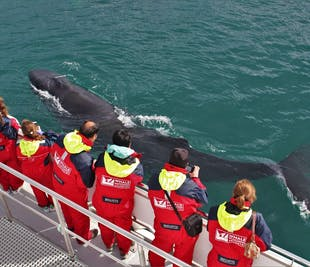 Whale Watching-Tour | ab Akureyri