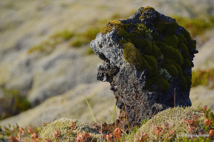 A head of a troll was sticking out of the moss in one part of the hike in Nesjavellir